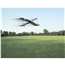 Droon Parrot Swing