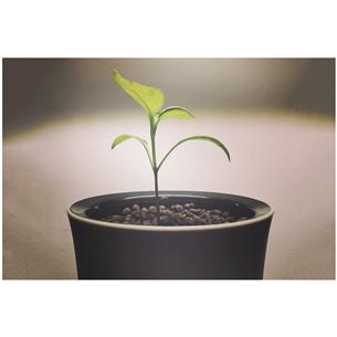 Умный горшок для растений Botanium